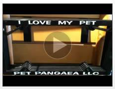 Pet Pangaea Story