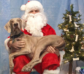 Santa will be landing at Pet Pangaea